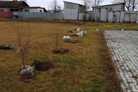 Акцию «Подари ребенку дерево» провели в Хабаровском районе